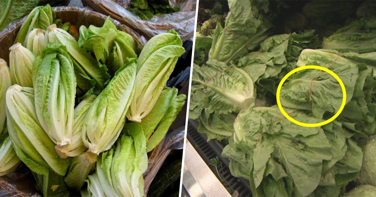 8ec8db8eb84ac 2 - Deadly Romaine Lettuce Outbreak Has Food Safety Experts Saying 'Do Not Eat'