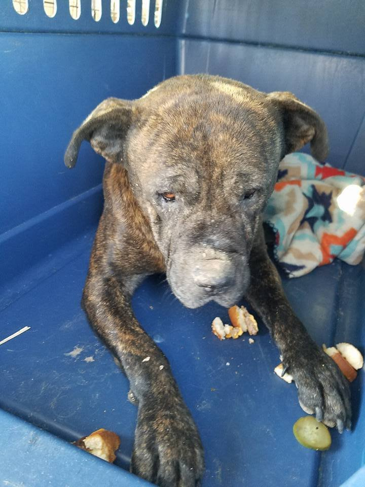27459640 1213626348767674 1220079678536736294 n - Dog Was Found In The Abandoned House With His Head Stuck In An Air Vent But Local Firefighters Rescued Him
