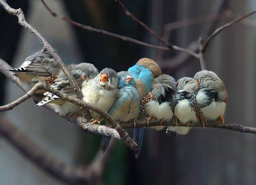Finch Family