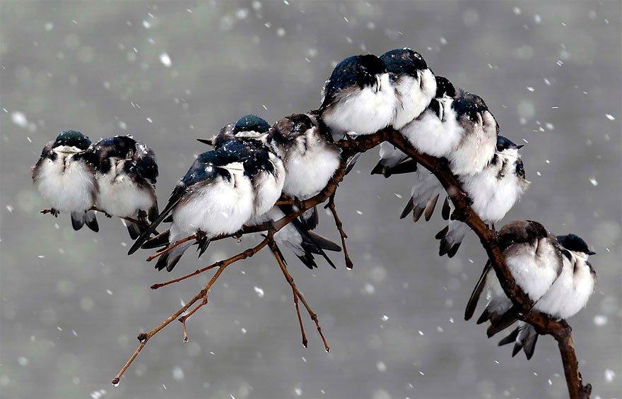 Birds During Snowstorm