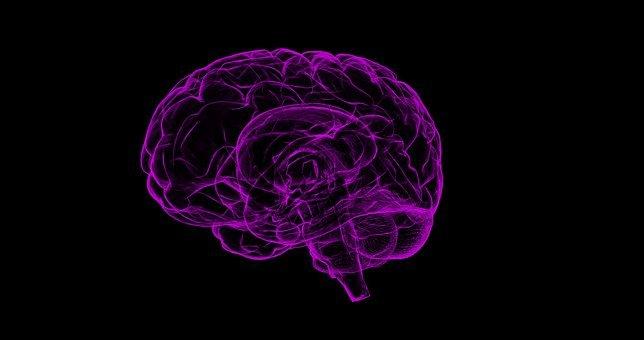 뇌, 인간의 해부학, 해부학, 인간의, 과학, 머리, 지성, 메모리