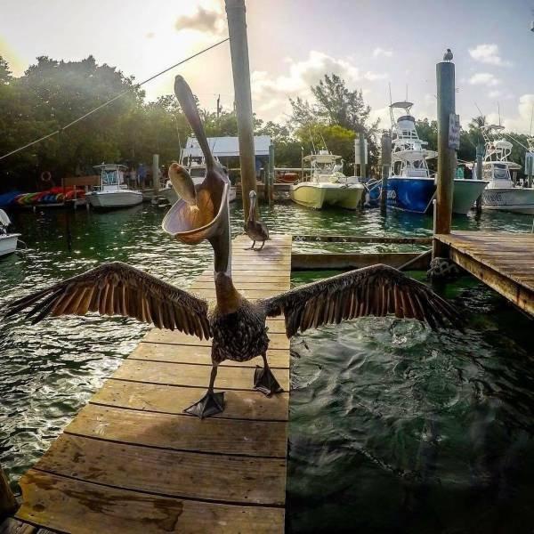 daily picdump 2582 640 29 - 13 imagens que mostram como os seres vivos são curiosamente únicos