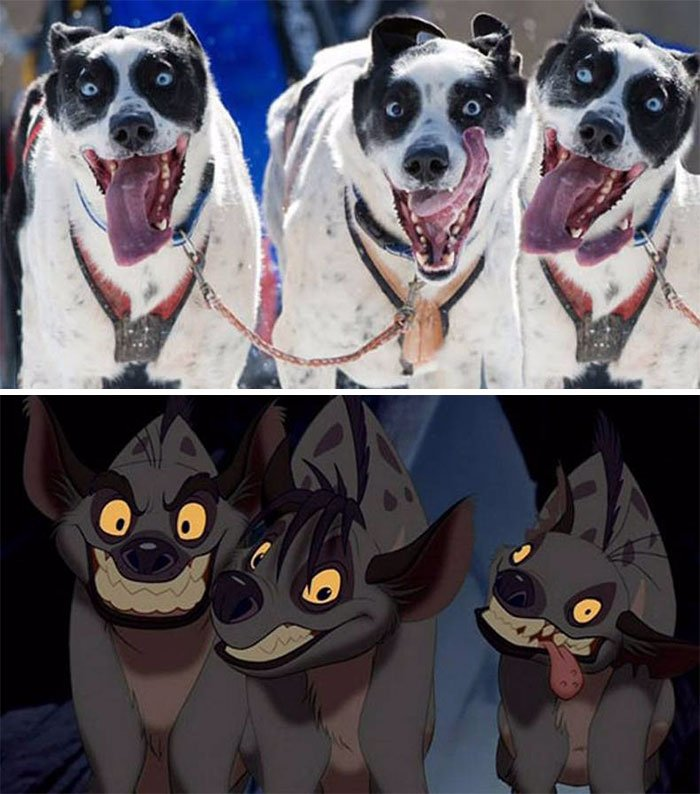 Estes cães hiperativos parecem Shenzi, Banzai e Ed do rei leão