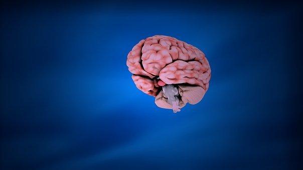 교육, 뇌, 해부학, 인간의, 과학, 의료, 건강, 머리, 의학, 마음