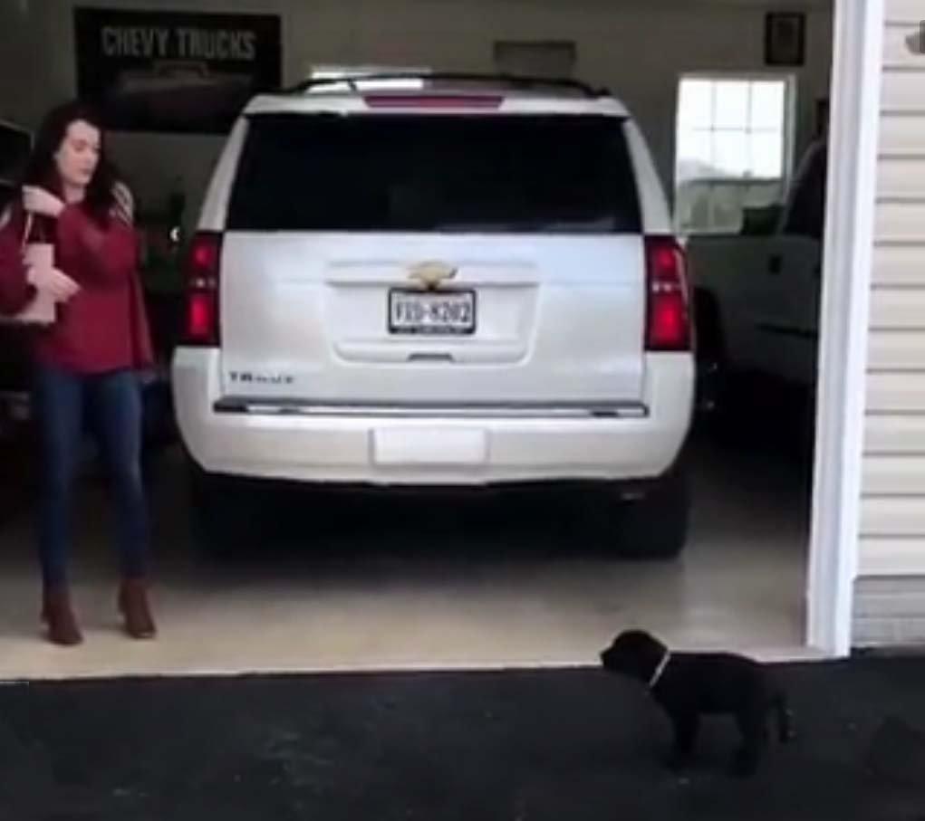 a-brand-new-puppy