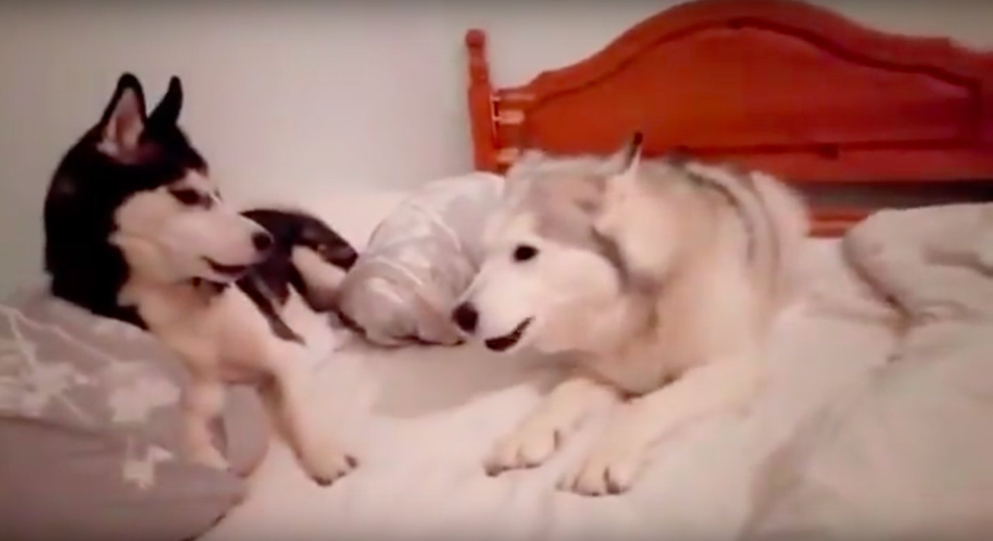 adorable-quarrel-between-two-puppies-3