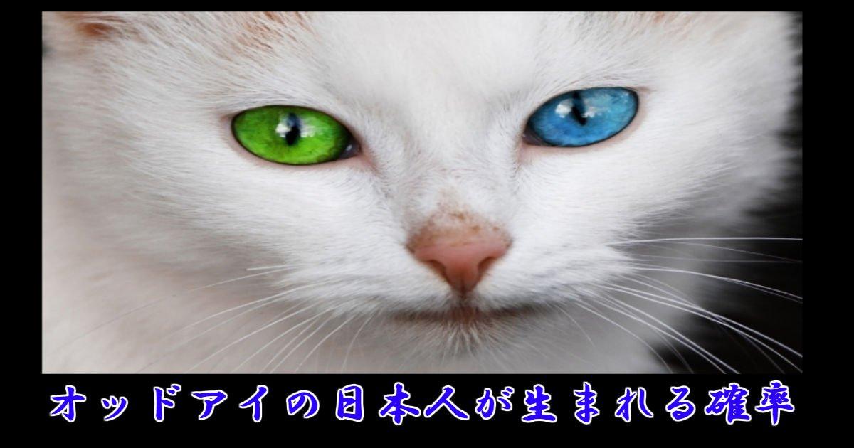 ai 1.jpg?resize=1200,630 - オッドアイの日本人が生まれる確率って何パーセント?!