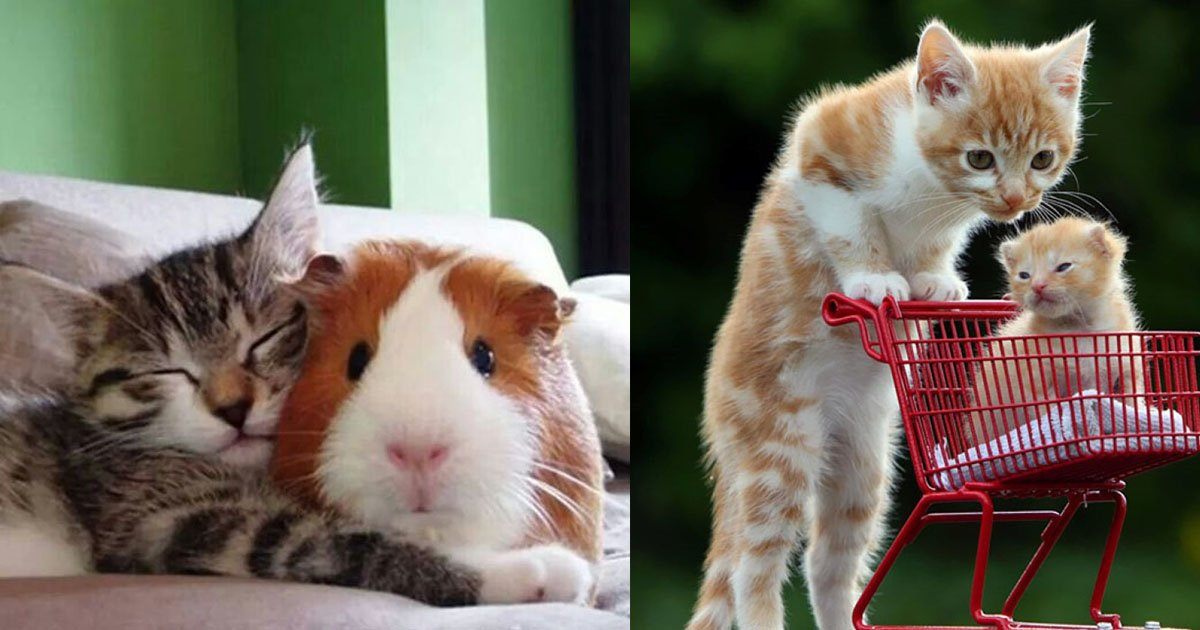 animals - This Compilation Of Cutest Animals Will Instantly Make Your Day Better  😍💞