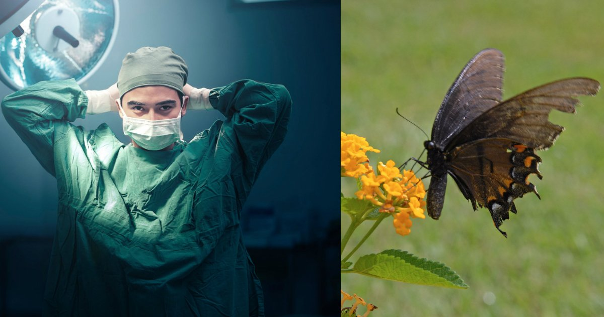 butterfly.jpg?resize=300,169 - Woman Performs Wing Transplant On Monarch Butterfly