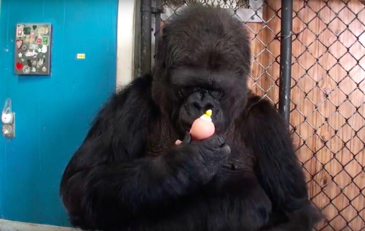 enfant-gorille-nourritures-et-adopte-chatons-2