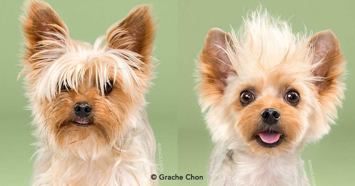 cover 32.jpg?resize=1200,630 - 8 fotos de perritos antes y después de cortarse el pelo