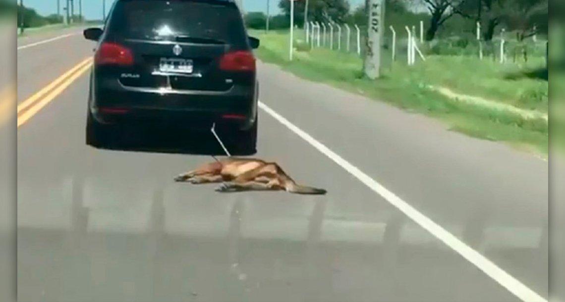 cover 4dd 1.png?resize=300,169 - Este hombre arrastró a su perro con el auto por kilómetros