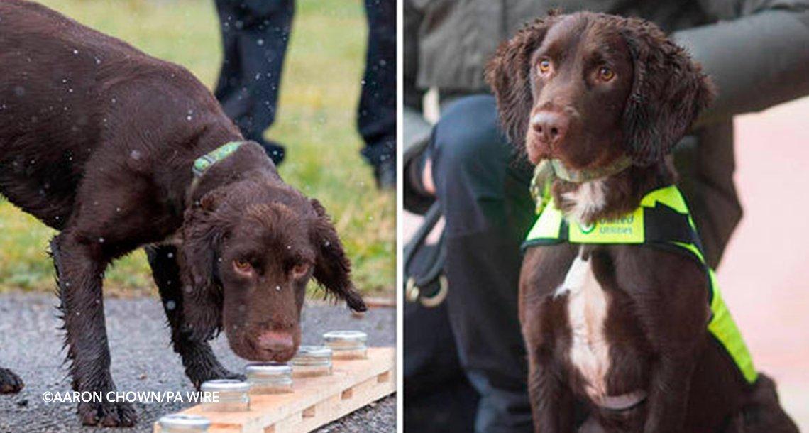 cover 4dog.png?resize=1200,630 - Contratan al primer perro que puede detectar fugas y tuberías rotas  con su olfato.