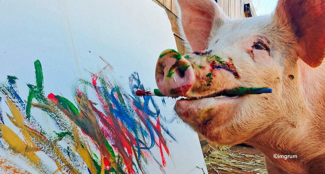 "cover 4pg - ""Pigcasso"", la cerdita que pinta cuadros que se venden por mil euros"