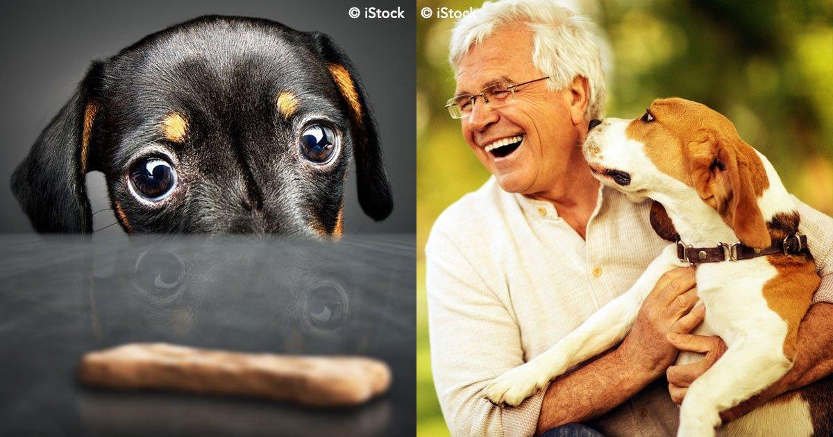 cover 89.jpg?resize=1200,630 - La ciencia lo confirma: los perros reconocen si no eres de fiar.