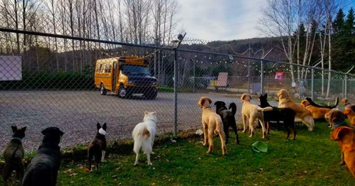 dog-driven-to-daycare-in-a-school-bus-in-all-weather-1