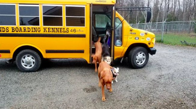 dog-driven-to-daycare-in-a-school-bus-in-all-weather-3
