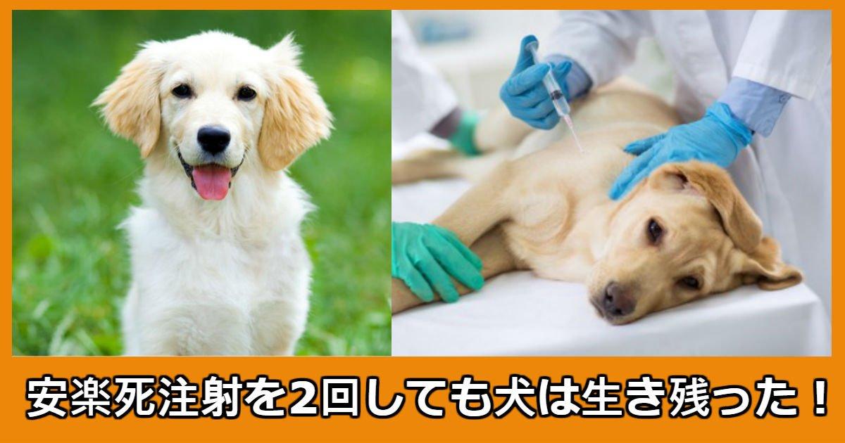 dog.jpg?resize=1200,630 - 2度の安楽死注射をした犬に起きた奇跡