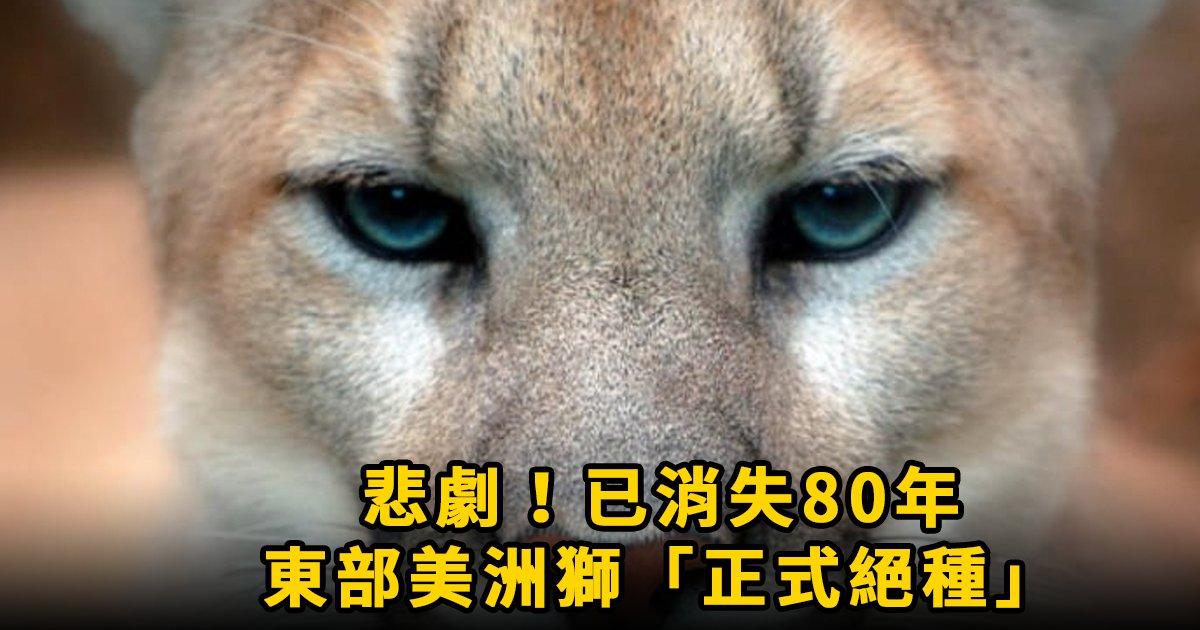 e69caae591bde5908d 1 2.png?resize=1200,630 - 令人震驚!2018年1月22日,東部美洲獅被證實「正式絕種」