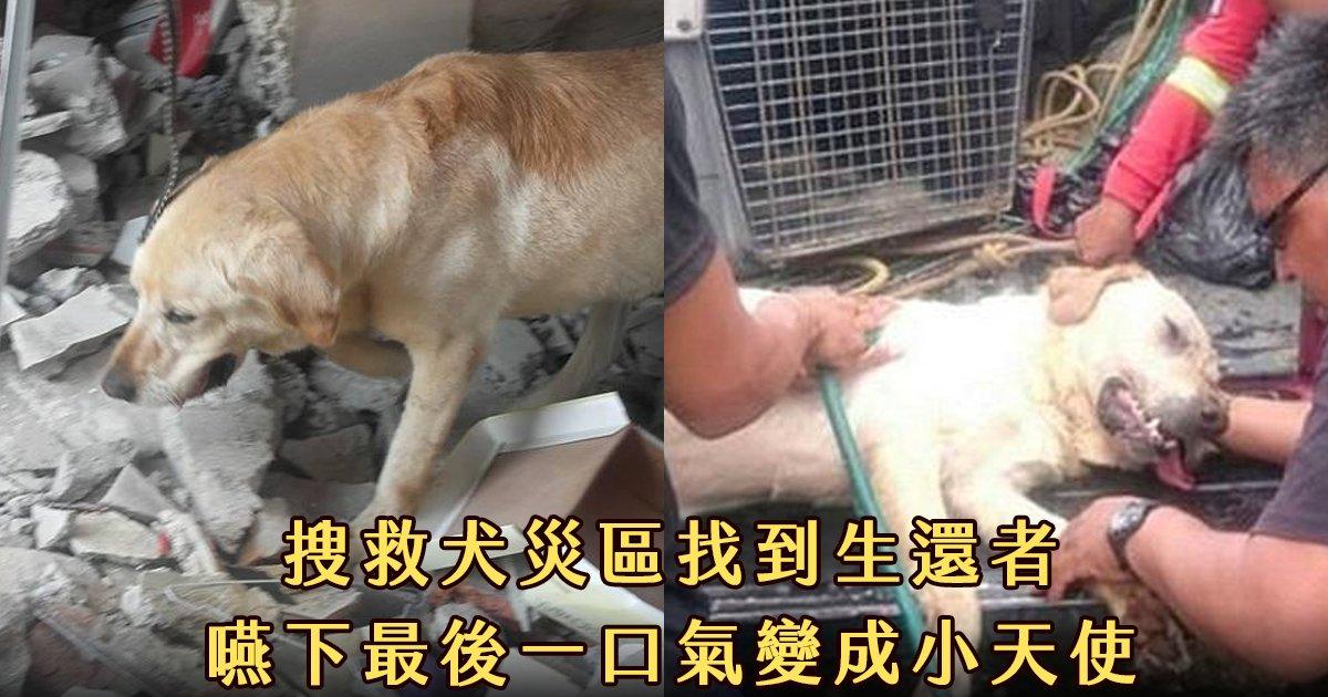 e69caae591bde5908d 1 22.png?resize=1200,630 - 搜救犬在災區「全力救援」找到生還者後自己卻不幸殉職...