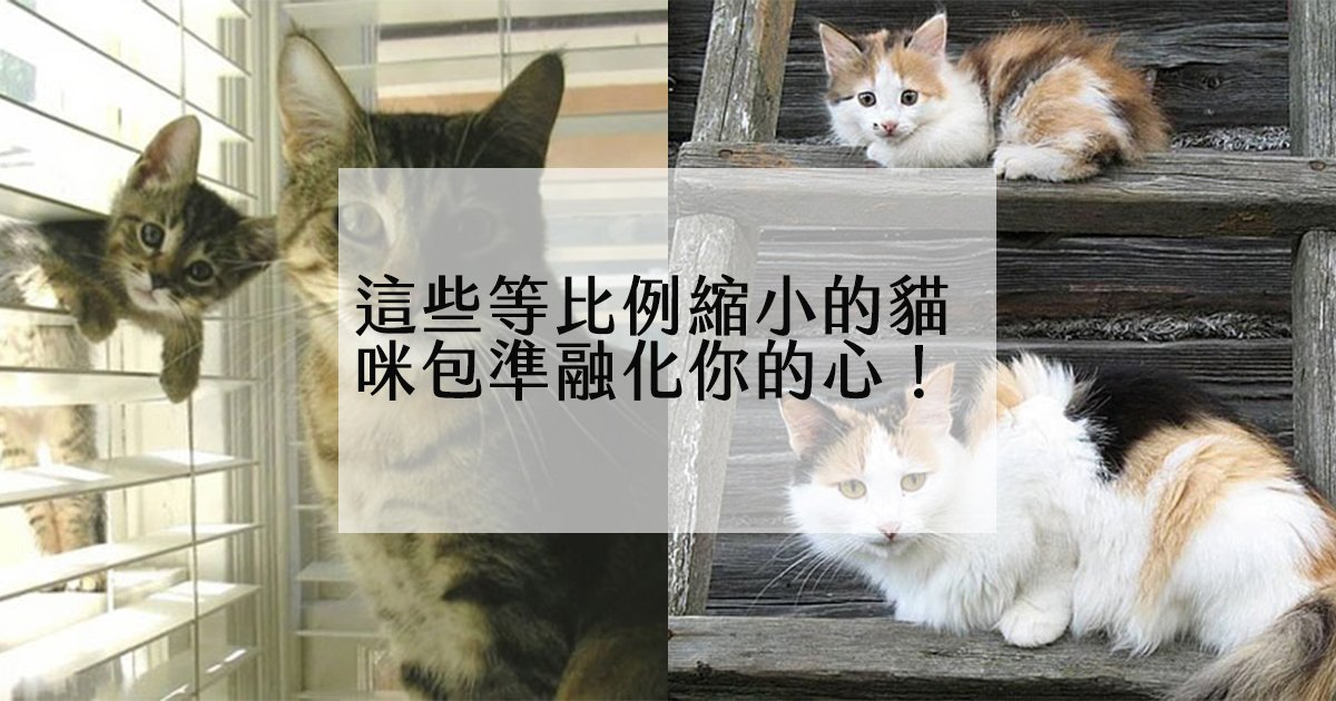 e69caae591bde5908d 1.jpg?resize=1200,630 - 孩子果真不能亂生!這些等比例複製貼上的貓咪們將療癒你疲憊的一天