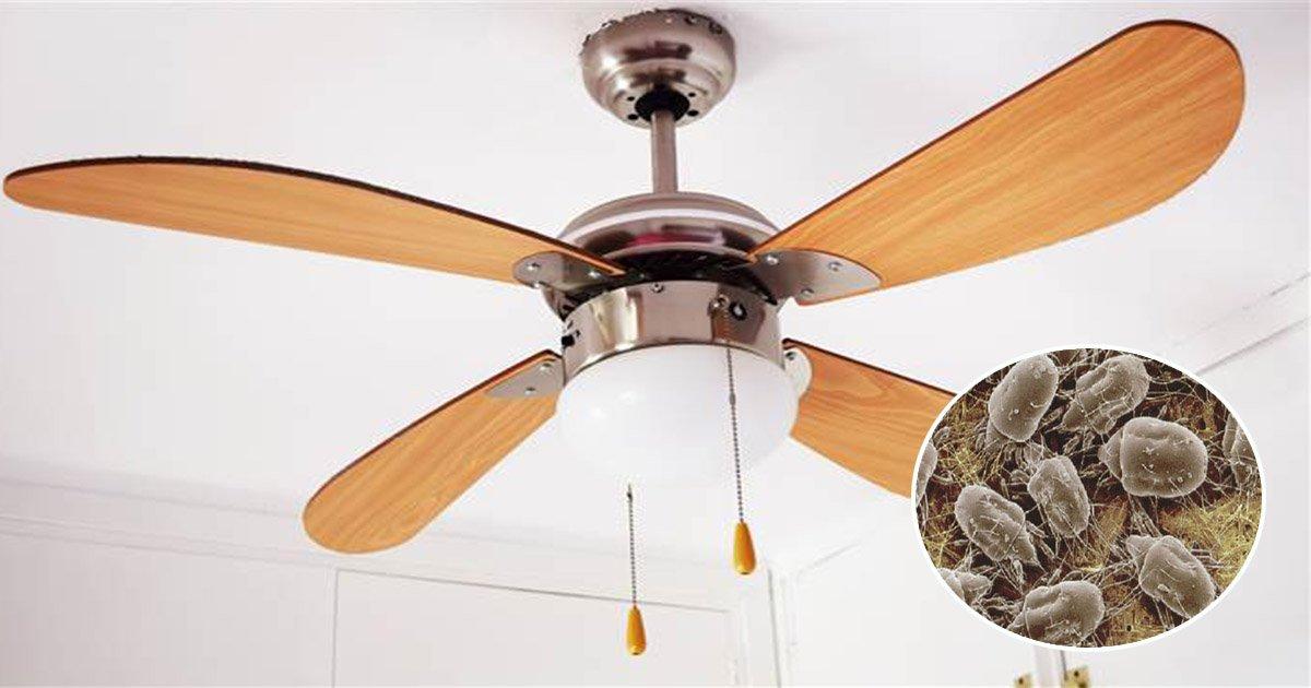 ec9790eb9dbcebaaa8eba5b4eab2a0eb8bb9 - Ceiling Fan Can Be A Serious Health Hazard – Here's The Reason Why