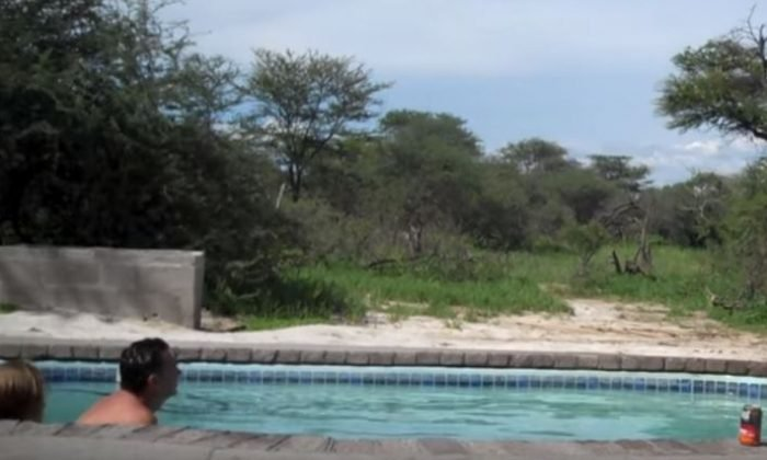 elephant crashes pool party st 700x420 - Elephant Crashes A Family's Pool Party In Africa