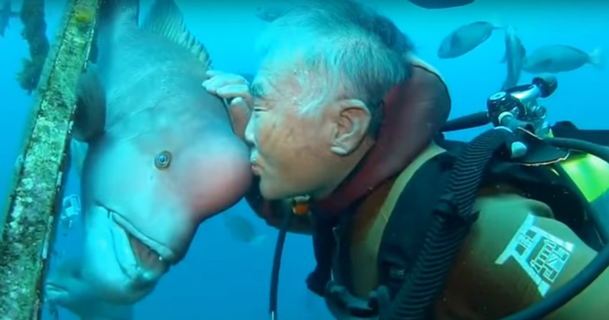 fish - Japanese Diver's 25 Year Friendship With A Fish