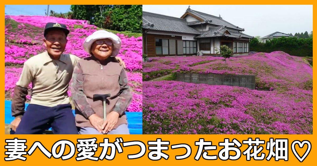 flower - 視力を失った妻へ裏庭にピンクの花畑を作ってくれた夫