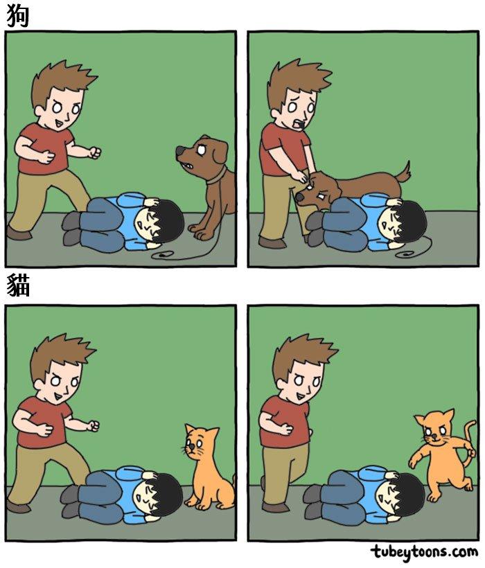 funny-cats-vs-dogs-comics-1-59bf9589d1da4__700