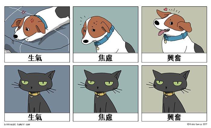 funny-cats-vs-dogs-comics-200-59c380533523b__700