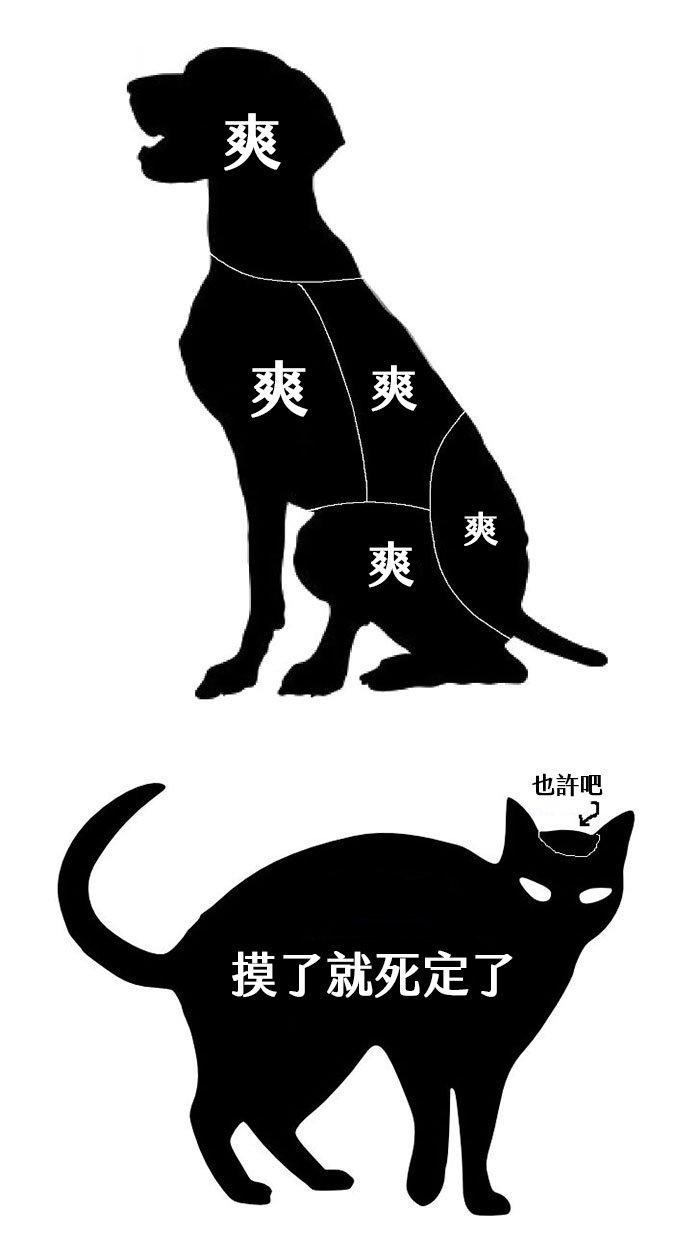 funny-cats-vs-dogs-comics-206-59c3aeab98203__700