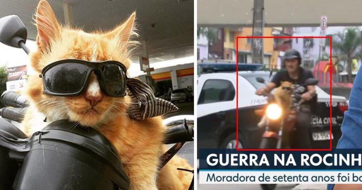 gato2111.jpg?resize=1200,630 - Gato que usa óculos escuros e anda de moto é o mais novo fenômeno da internet