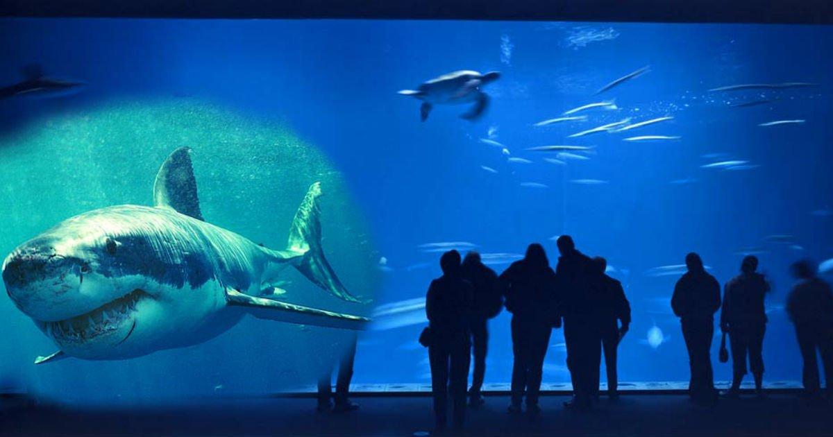 gggggggg.jpg?resize=1200,630 - Mais pourquoi voudriez-vous taper sur la vitre d'un aquarium, quand c'est un réservoir de requin