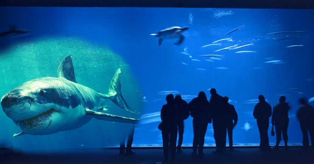 gggggggg.jpg?resize=636,358 - Why On Earth Would You Tap On Aquarium Glass Display, When It's A Shark Tank