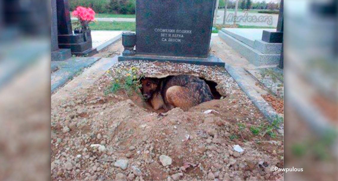 gsgsdg.png?resize=1200,630 - Una perrita hace un hoyo en la tumba de su dueño, guardaba un secreto que sorprendió a todos