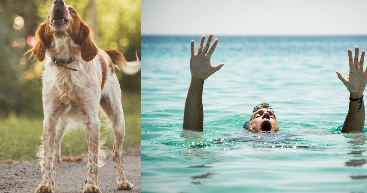 herodog.jpg?resize=300,169 - Hero Dog Started Barking At Night Just To Save Elderly Man Who Fell Into Water