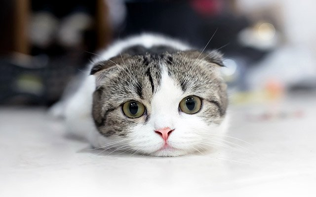 Image result for 猫
