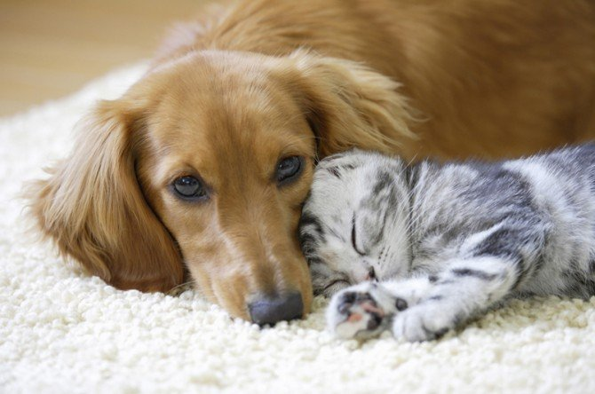 Image result for 犬 猫