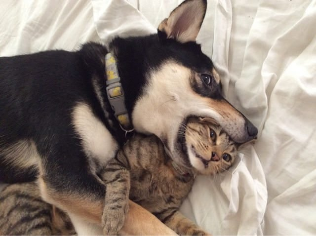Image result for 犬猫