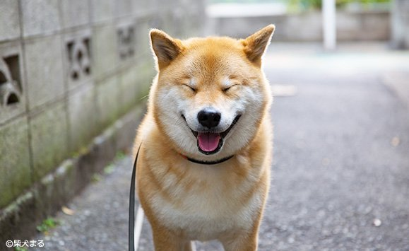 Image result for 犬