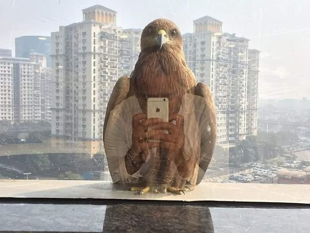 Even eagles like the iPhone