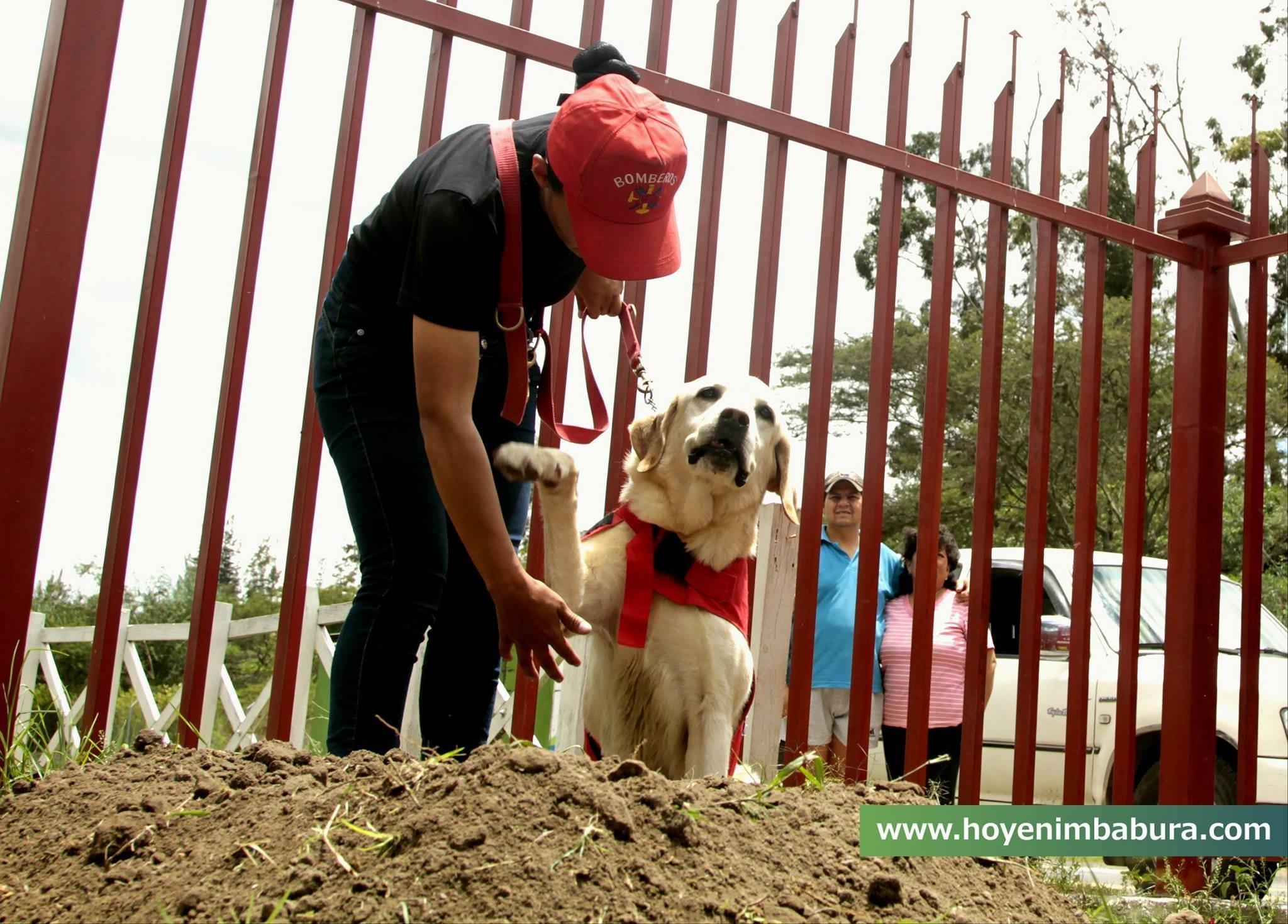 img 5a7e0b99291b5 - 搜救犬在災區「全力救援」找到生還者後自己卻不幸殉職...