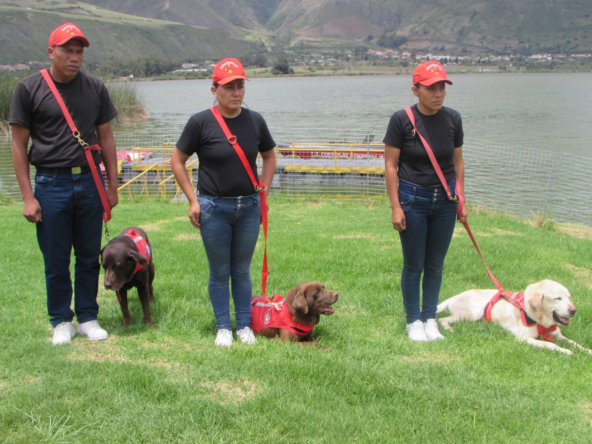 img 5a7e0bd2afca5 - 搜救犬在災區「全力救援」找到生還者後自己卻不幸殉職...
