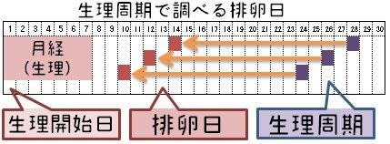 Image result for オギノ式 計算