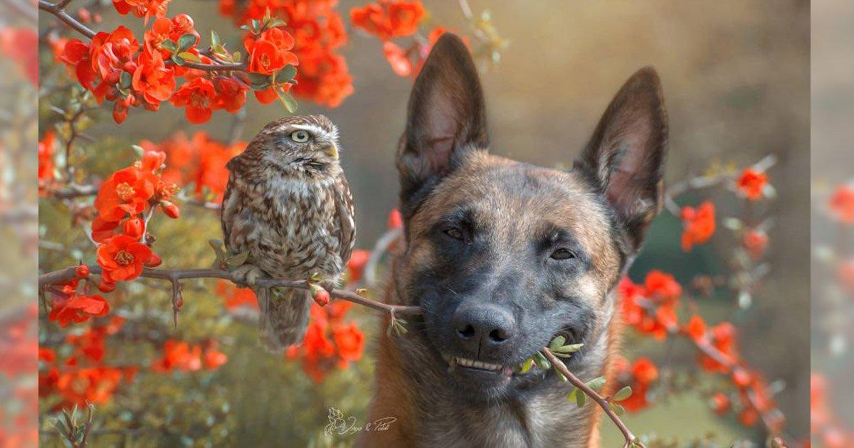 mainphoto chienchouette.jpeg?resize=1200,630 - Un chien et des rapaces : une photographe capture leur étonnante amitié