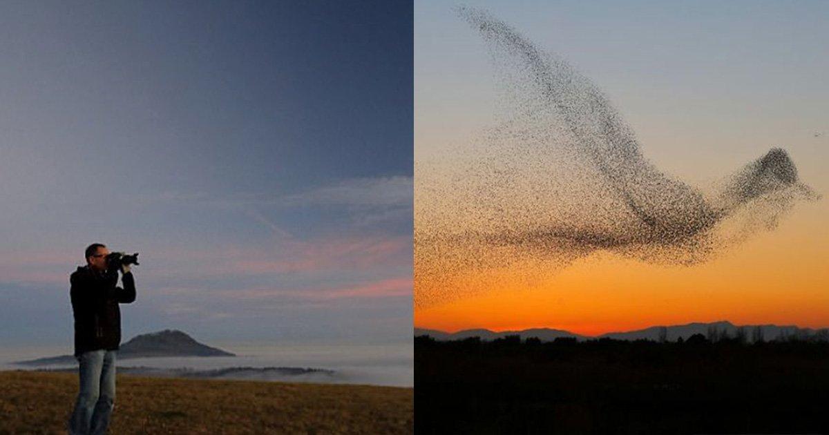 mainphoto etourneau daniel biber.jpg?resize=648,365 - Des photos montrent l'incroyable murmuration d'étourneaux sous forme d'un oiseau géant
