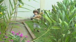 pequeno-arthur-de-2-anos-considera-tata-uma-companheira-e-brinca-com-a-galinha-todos-os-dias