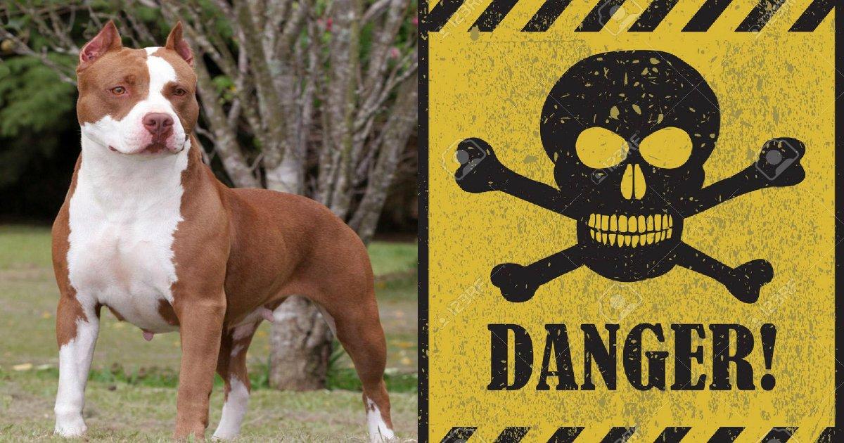 pitbull - Pit Bull Goes In A Barking Spree Sensing Huge Danger