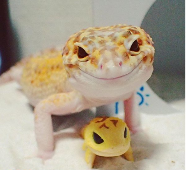screenshot 300x274 - Cute Gecko Finds His New BFF, A Toy Gecko And Falls In Love With Him. This Story Will Definitely Make Your Day.